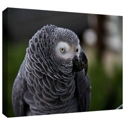 """Art Wall 16""""x22"""" 'Parrot' by Lindsey Janich Photographic Print on Canvas"""