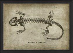 The Artwork Factory Lizard on White Framed Print