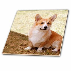 ct_1065_4 Pembroke Welsh Corgi Ceramic Tile, 12-Inch