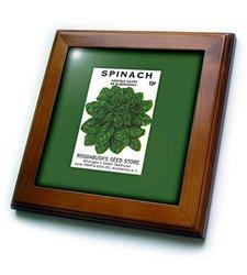 "3dRose Spinach Norfolk Savoy Vegetable Seed Packet Framed Tile - 8 x 8"""