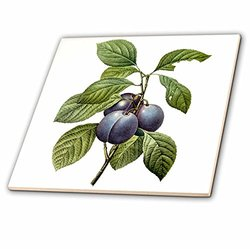 3dRose Watercolor Fruit Garden Plums Ceramic Tile - Size: 6""