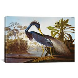 "iCanvasART 1468 Louisiana Heron ""Birds of America"" Canvas - 40""X26""X0.75"""