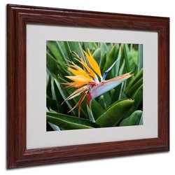 "Trademark Fine Art 'Bird of Paradise' 11"" x 14"" Wood Frame Art"