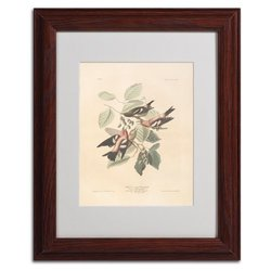 "Trademark Fine Art 'White-Winged Crossbill' 11"" x 14"" Wood Frame Art"