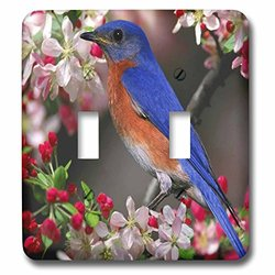 lsp_55179_2 Beautiful Bluebird N Cherry Blossoms Double Toggle Switch