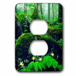 lsp_206986_6 USA, Tennessee, Great Smoky Mountain Np. Wildflowers in the Forest. 2 Plug Outlet Cover