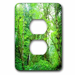 lsp_206996_6 USA, Oregon, A Stream in An Old-Growth Forest. 2 Plug Outlet Cover