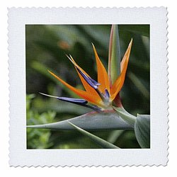 Bird of Paradise, Kula Botanical Gardens, Hawaii - Us12 Dpb0020 - Douglas Peebles - Quilt Square, 12 by 12-Inch (qs_89515_4)