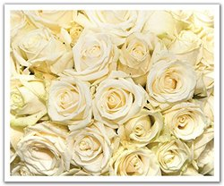 JP London POS2377 uStrip Peel and Stick Removable Wall Decal Sticker Mural White Rose Wedding Bouquet Flowers, 24-Inch by 19.75-Inch