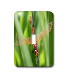 3dRose LLC lsp_21748_1 Insects Dragonfly Single Toggle Switch