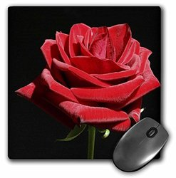 """3dRose 8""""x8"""" Mouse Pad - Irresistible Red Rose"""