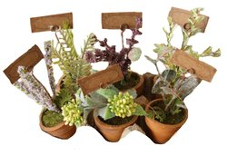 Your Hearts Delight 6 Mini Herb Garden Pots with Tags