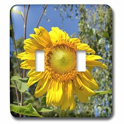 3dRose lsp_30803_2 Sunshine Sunflower Flowers Flower Photography Double Toggle Switch