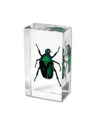 WeGlow International Real Green Rose Chafer Beetle Paperweight