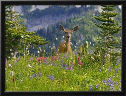 Art Deer in Wildflowers by Craig Tuttle Framed Photographic Print - Green