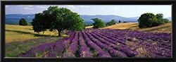 "Art ""Flowers Lavender Field"" Framed Print - Purple - Size: 14""x 38"""