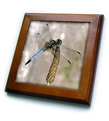 "3dRose Beautiful Dragonfly Framed Tile Artwork - Size: 8""x8"""