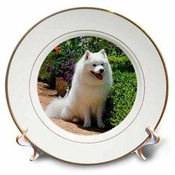 "3dRose 8"" American Eskimo Dog Zandria Muench Beraldo Porcelain Plate"