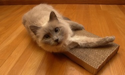 Royal Pet Zip Kitty New Single Cat Scratcher