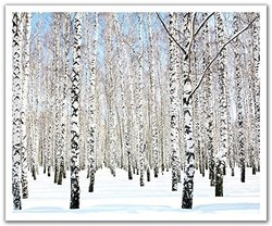 JP London POS2341 uStrip Peel and Stick Removable Wall Decal Sticker Mural Winter Birch Forest Trees, 24-Inch by 19.75-Inch