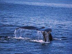 JP London 6X4.5' Peel & Stick Pacific Whale Tale Ocean Splash Wall Sticker