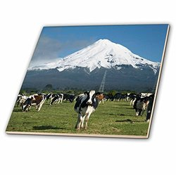 3dRose Dairy Cows Farm Animals Taranaki Wall Ceramic Tile - Size: 6""