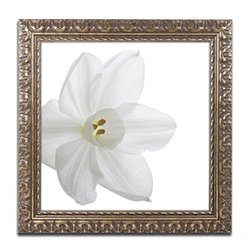 "Trademark Fine Art Paper White by Kurt Shaffer Artwork, 16 by 20"", Gold Ornate Frame"