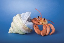 Douglas Henry Hermit Crab with Shell Cuddle Toy