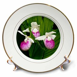 3dRose cp_92113_1 MN, Itasca SP, Showy Lady-Slipper flower - US27 PHA0000 - Peter Hawkins - Porcelain Plate, 8-Inch