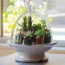 Evergreen Pedestal Base Terrarium with Glass Top