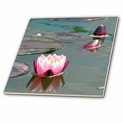 3dRose ct_112969_7 Pink Water Lily-Pretty Waterlily Aquatic Flower Photography-Pond Flowers Buds Lilypad-Lilypads-Glass Tile, 8-Inch