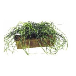 "Mamone Home & Garden Grass in Metal Rectangle Planter - Size: 1"" x 8"""
