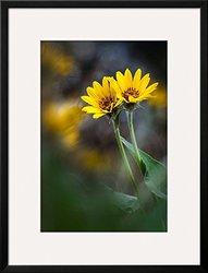 """Art.com For Maria by Ursula Abresch Framed Art Print, 34 x 26"""", Yellow"""