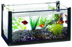American Educational Aquarium with Acrylic Cover 6 Gallons